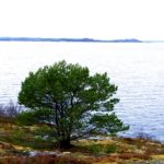 Snilfjord
